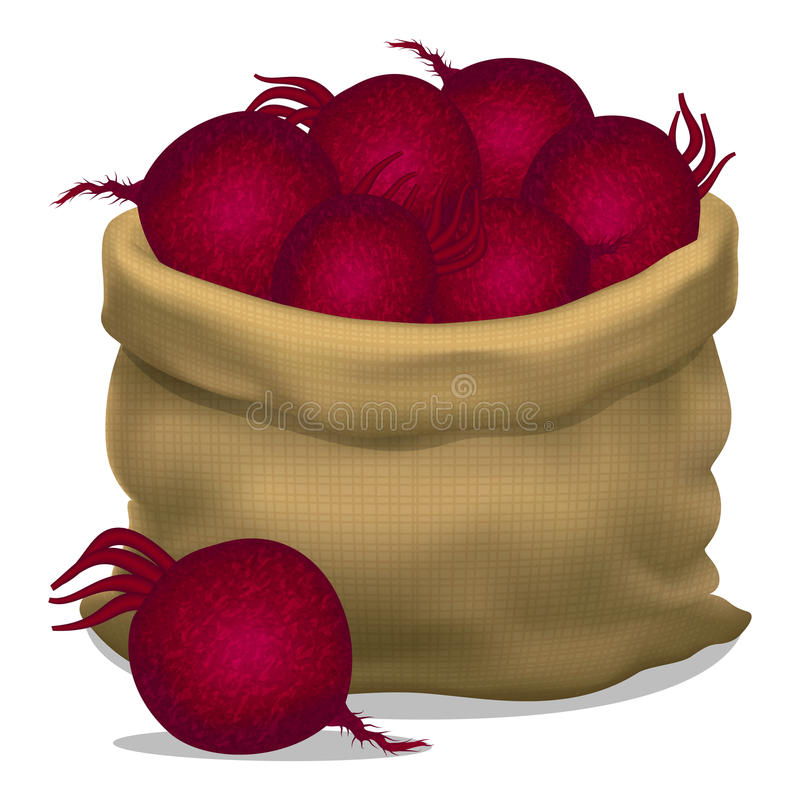 Illustration of a sack of beets on a white background. Vector vector illustration