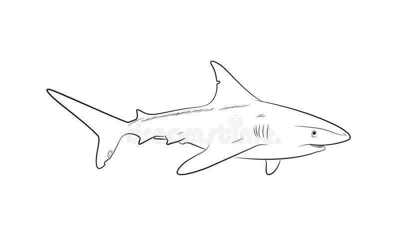 Illustration sauvage de vecteur de dessin de requin illustration de vecteur