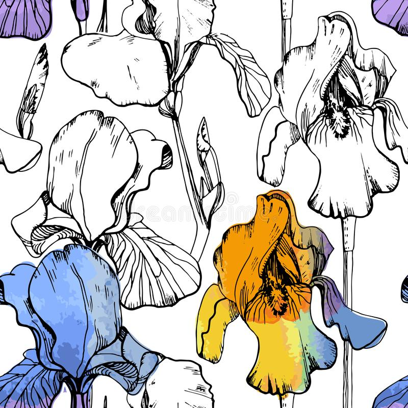 Illustration of seamless pattern with watercolor irises. Summer flower on white background. Floral wrapping paper. stock illustration
