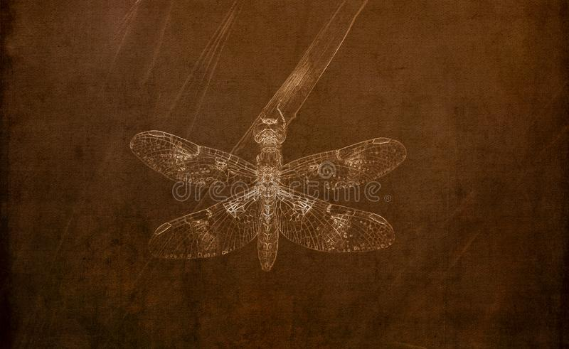 Illustration in Sepia of an Eastern Amberwing Dragonfly Perithemis tenera Perched on Grass stock photography