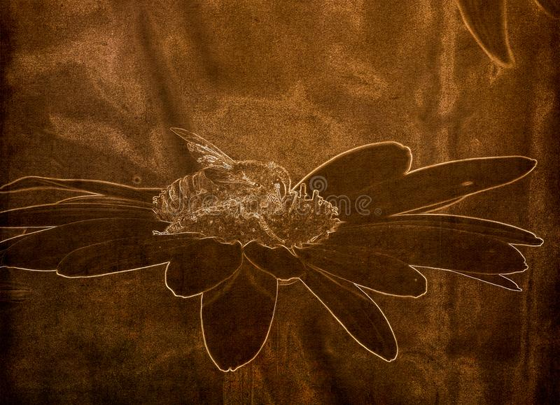 Illustration in Sepia of a  Macro of a Worker Honeybee Apis mellifera Resting on a Flower stock image
