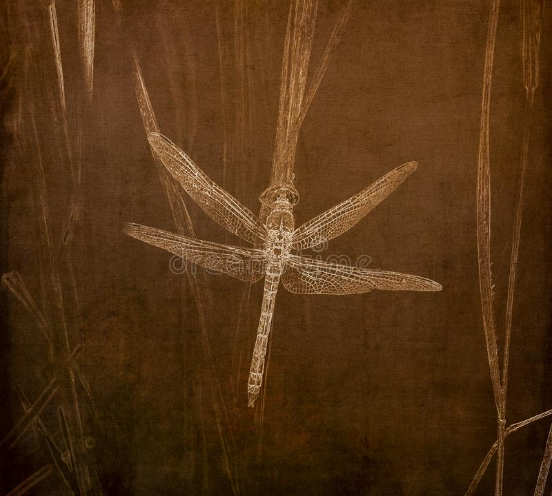 Illustration in Sepia of a Western Pondhawk Dragonfly Erythemis collocata Perched on a Grass stock images
