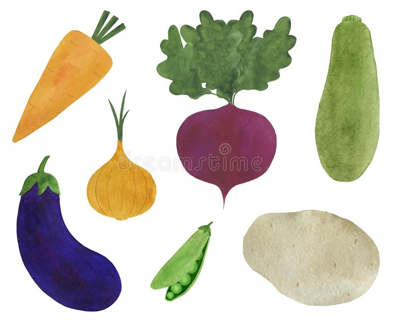 Set of fresh vegetables watercolor illustration vegetarianism ingredients cooking beetroot carrot onion zucchini eggplant potato. Illustration  Set of fresh stock illustration