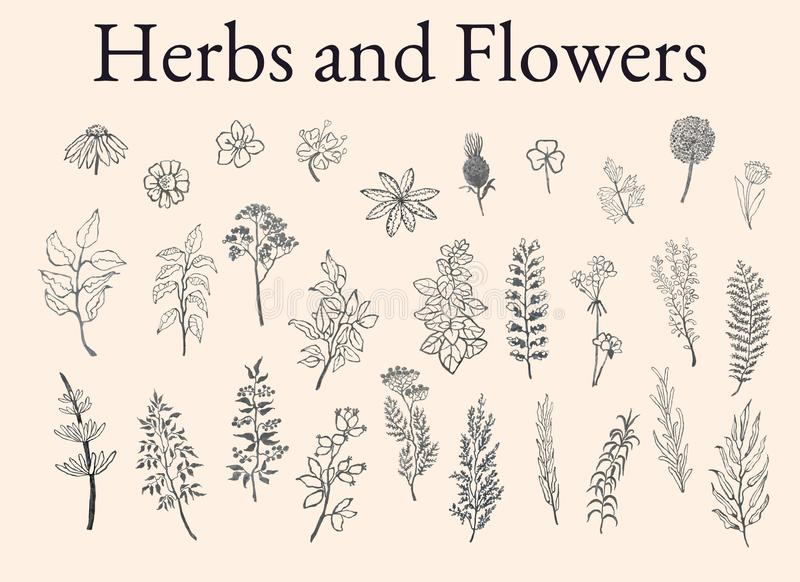 Illustration set of herbs, plants and flowers sketches vector illustration