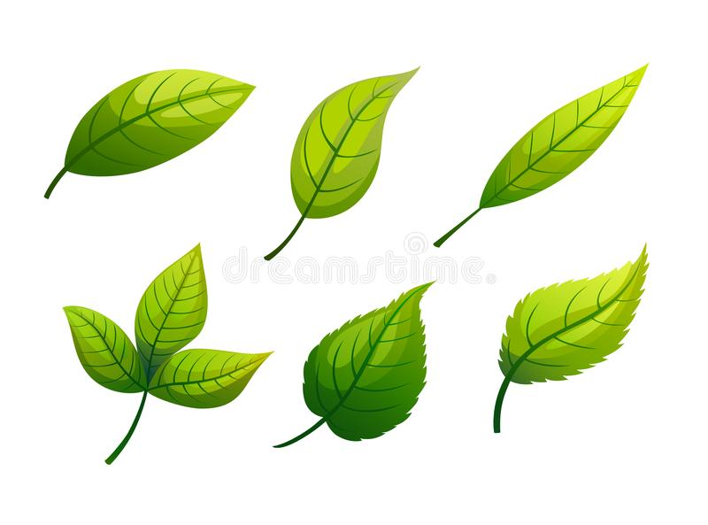 Illustration of the shape of a shrub on a white background. royalty free illustration