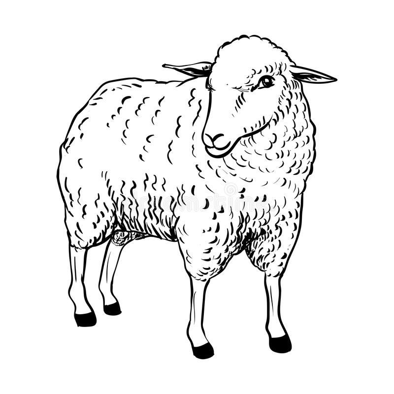 Illustration of Sheep - Vector Illustration royalty free illustration