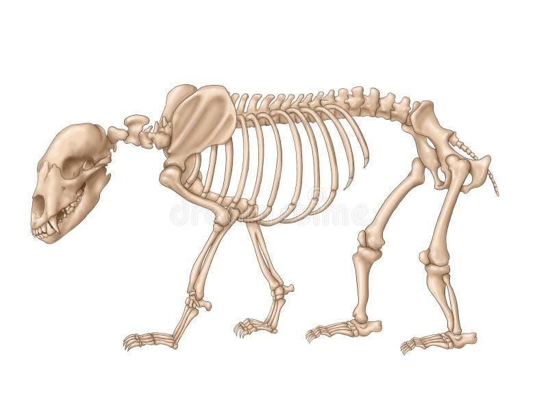Bear skeleton stock illustration. Illustration of wild - 175918505