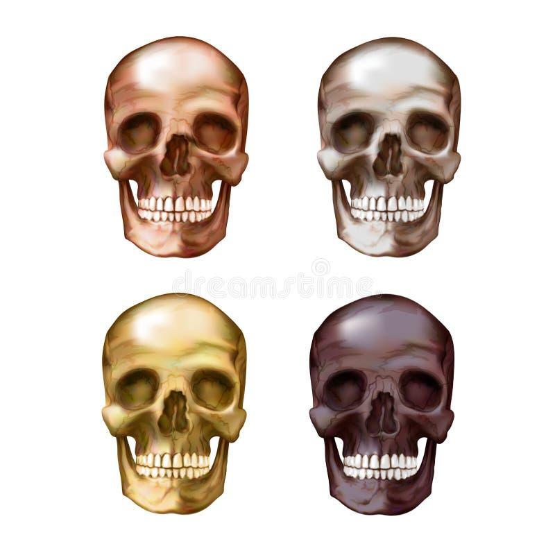 Illustration of a skull. Bronze, gold, metallic, burgundy color royalty free illustration