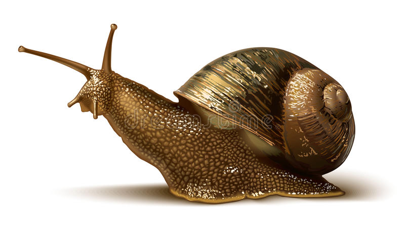 Illustration of a snail. Illustration of a big snail on the white background royalty free illustration