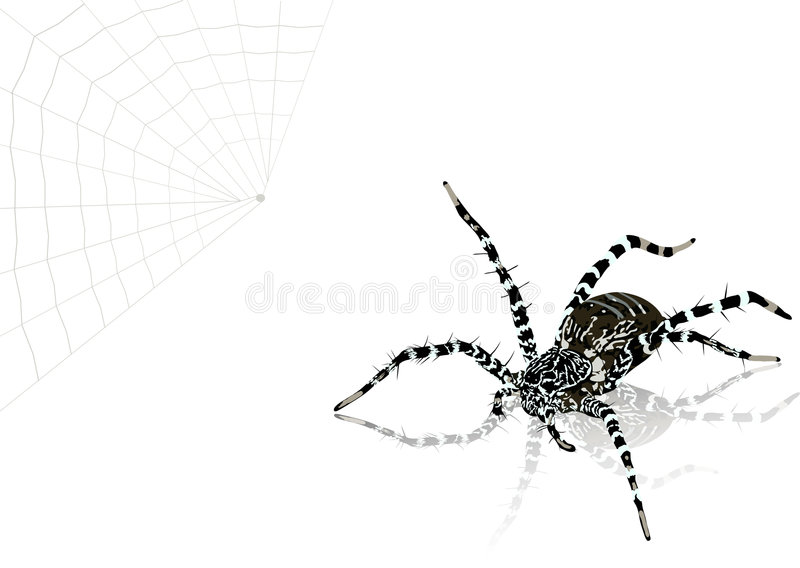 Illustration of spider. The vector illustration of spider royalty free illustration
