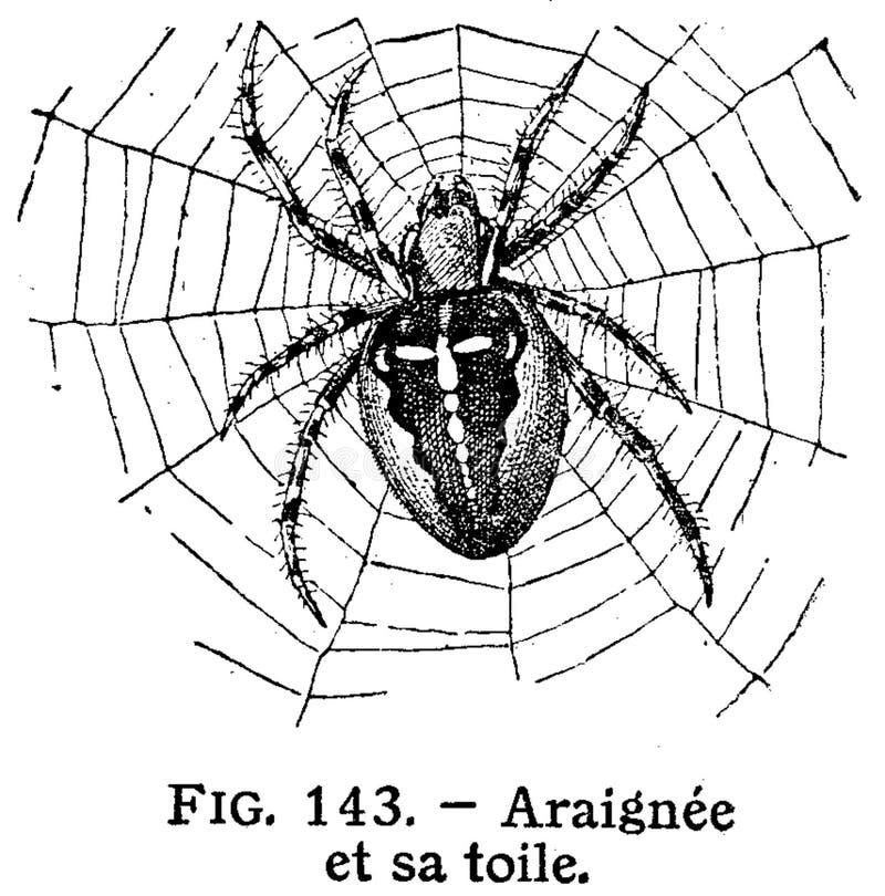 Illustration Of Spider Free Public Domain Cc0 Image