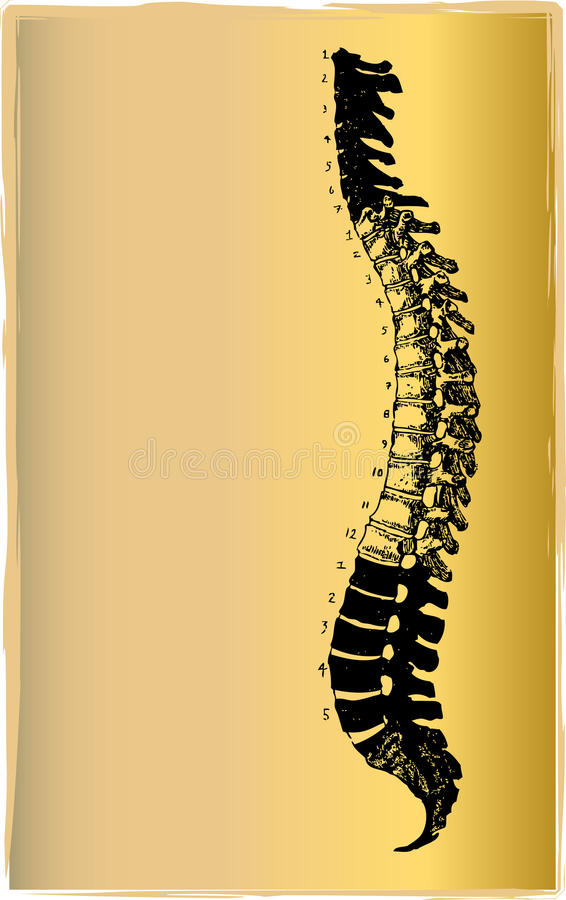 Illustration spinale de corde illustration de vecteur