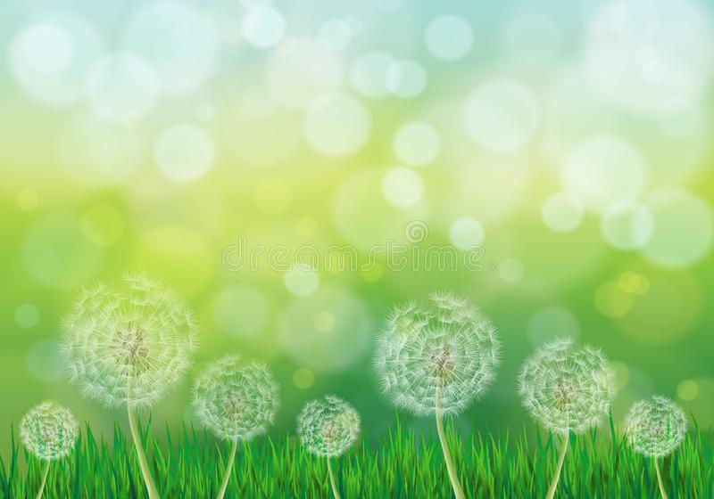 Illustration of spring green background with white dandelions royalty free illustration