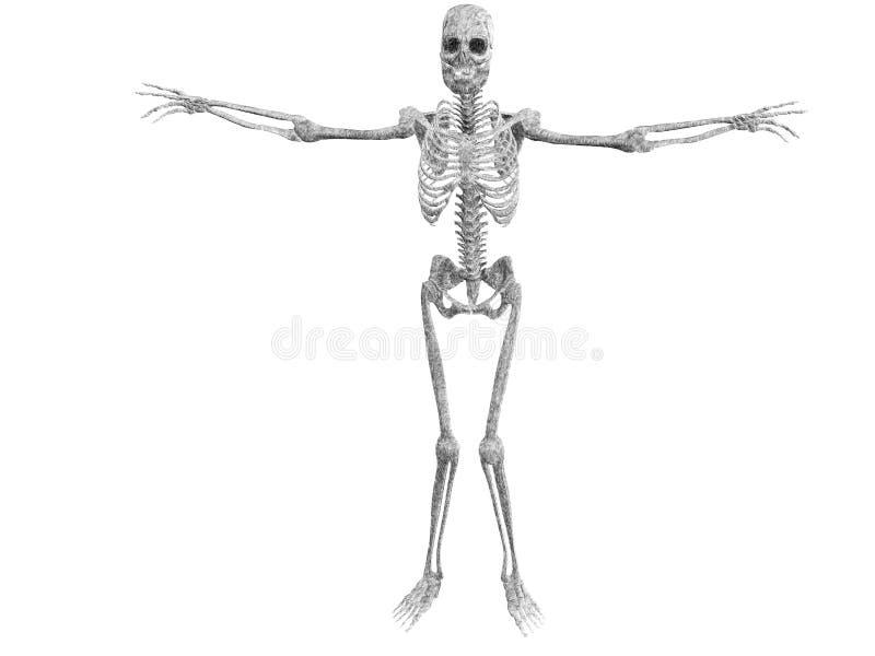 Illustration squelettique illustration libre de droits