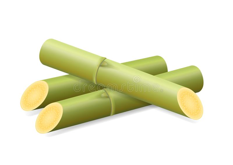 Sugar Cane, Cane, Pieces of Fresh Sugarcane Green, Sugar Cane Cut Isolated on White Background stock illustration
