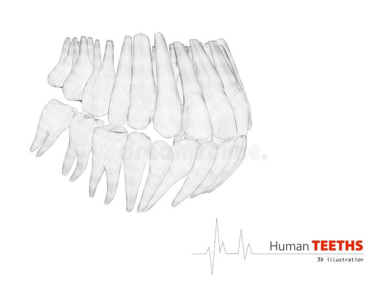 Illustration of Teeths , medicine and health concept design element. vector illustration