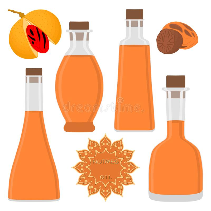 Illustration on theme big set different types nutmeg oil. Bottles various size. Nutmeg pattern consisting of collection oil for organic health beverage in vector illustration