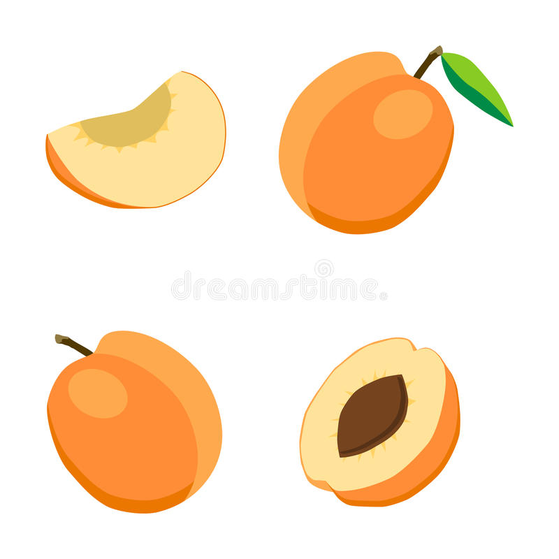 Illustration on the theme of fruit apricot, label market stock illustration