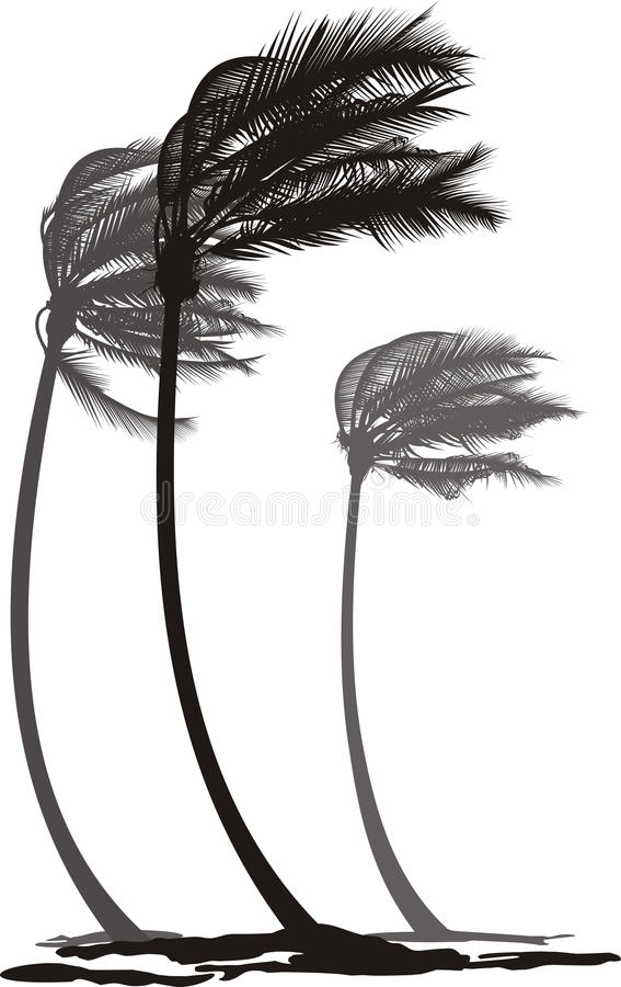 Download Palms in the wind stock vector. Image of high, trees - 30205425