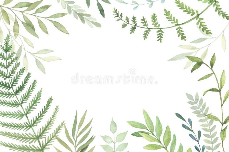 Illustration tirée par la main d'aquarelle Cadre botanique avec l vert illustration de vecteur