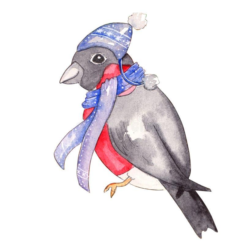 Illustration tirée par la main d'aquarelle de bouvreuil illustration libre de droits