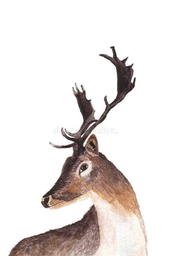 Illustration tirée par la main d'aquarelle de portrait de cerfs communs photos stock