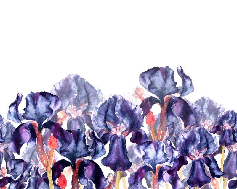 Illustration tirée par la main d'aquarelle des fleurs bleu-foncé d'iris Frontière sans couture dans un style d'aquarelle illustration libre de droits