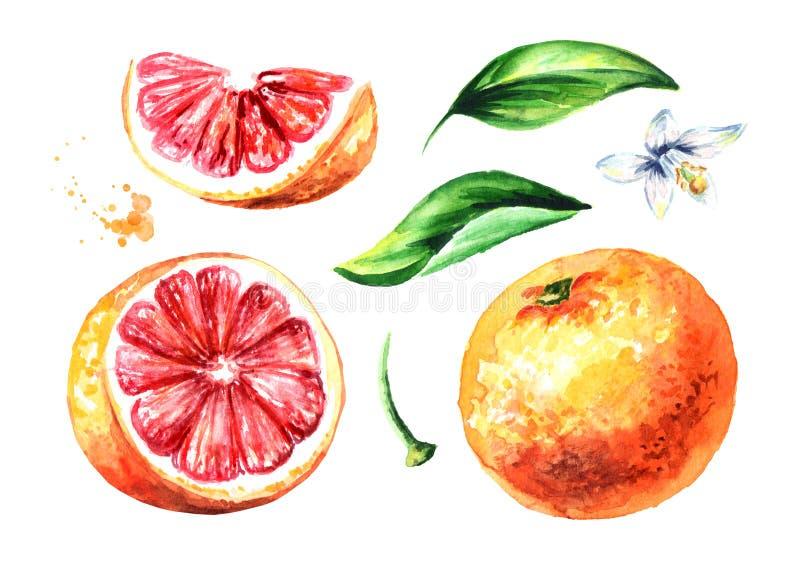 Illustration tirée par la main d'aquarelle, d'isolement sur le fond blanc illustration libre de droits