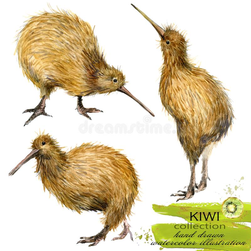Illustration tirée par la main d'aquarelle d'oiseau de kiwi illustration libre de droits
