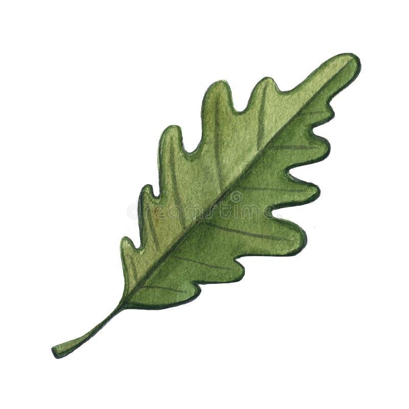 Illustration tirée par la main d'aquarelle d'un champignon de gland de feuille sur le fond blanc Temps de chute d'automne moisson illustration libre de droits