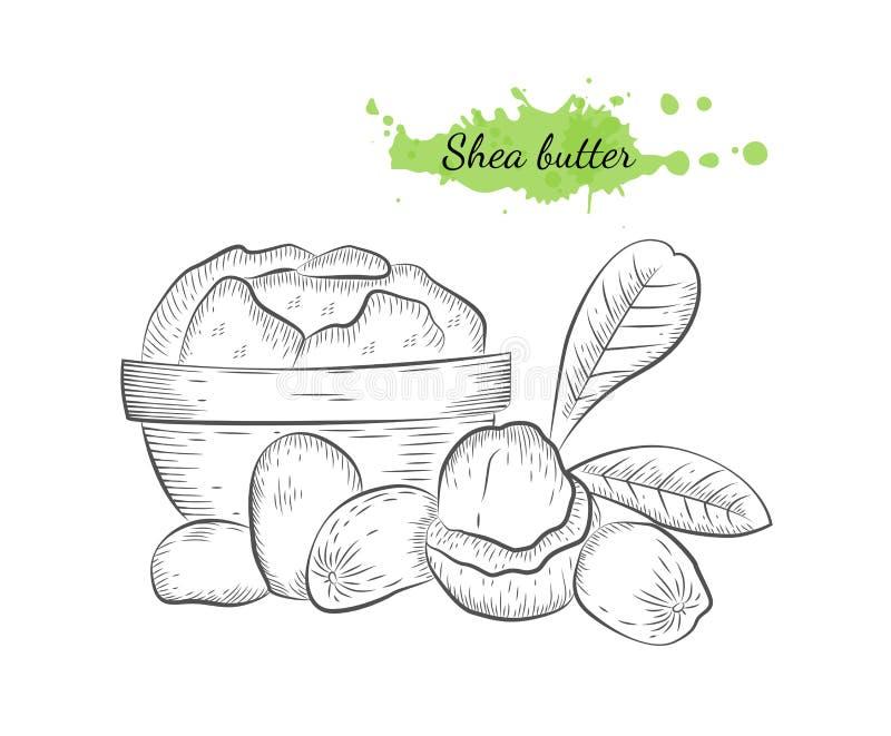 Illustration tirée par la main d'isolement de vecteur de beurre de karité illustration libre de droits