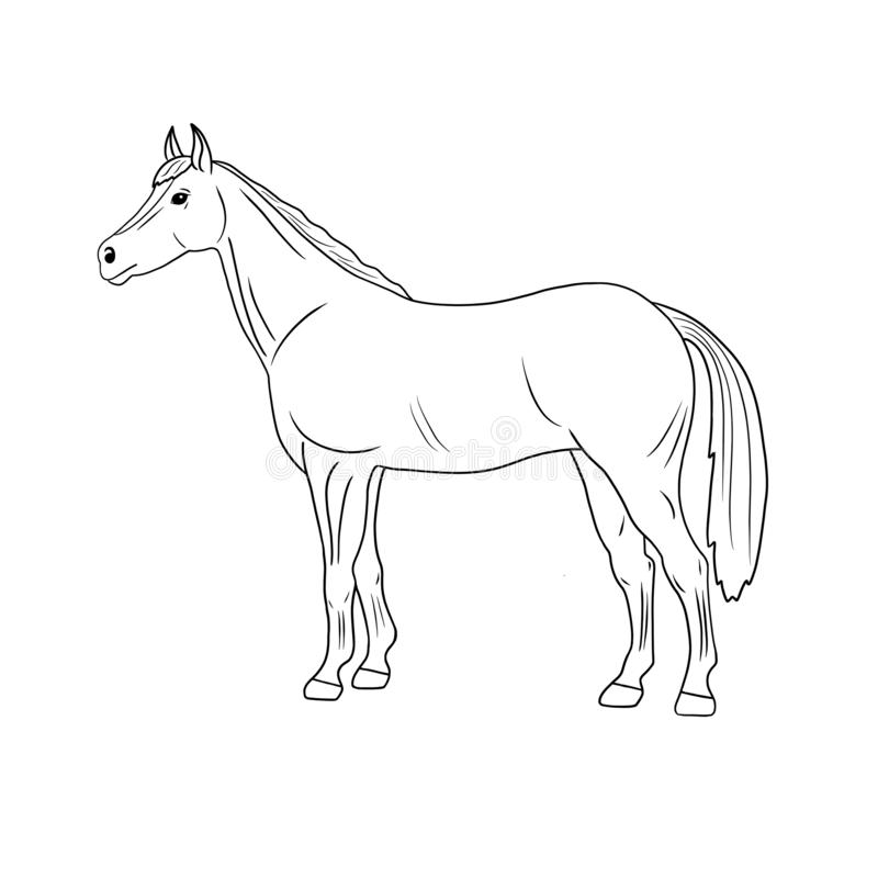 Illustration tirée par la main de cheval d'animal de ferme de schéma d'isolement sur le fond blanc illustration stock