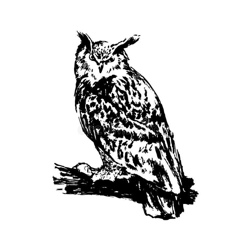 Illustration tirée par la main de croquis de hibou Dessin à l'encre noire de vecteur d'isolement sur le fond blanc Style grunge illustration libre de droits