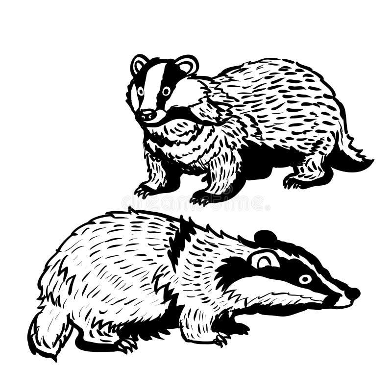 Illustration tirée par la main de deux Blaireau-vecteurs illustration libre de droits