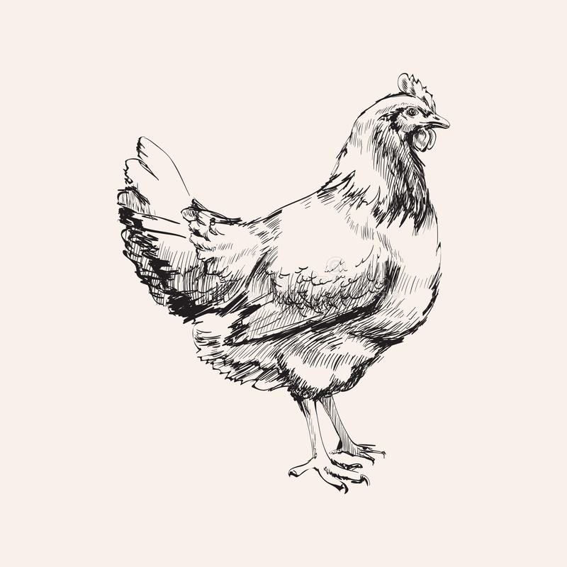 Illustration tirée par la main de Hen Vector de poulet de croquis illustration stock