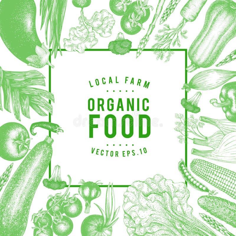 Illustration tirée par la main de légumes de vecteur Calibre de bannière de style de vintage Rétro fond organique de nourriture d illustration stock
