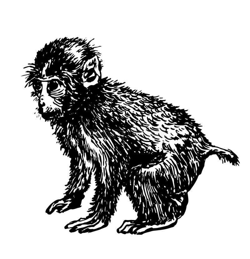 Illustration tirée par la main de petit de singe croquis de dessin illustration stock