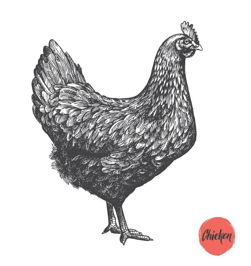 Illustration tirée par la main de poulet Éléments de viande de poulet et de produit de vintage d'oeufs illustration libre de droits