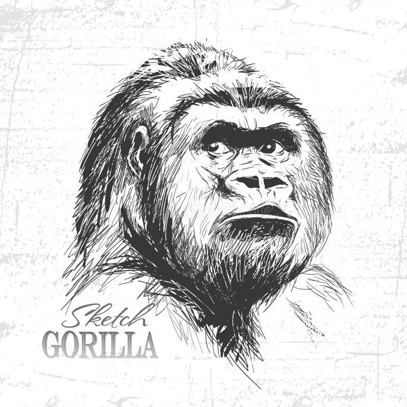 Illustration tirée par la main de style de croquis de visage de singe illustration stock