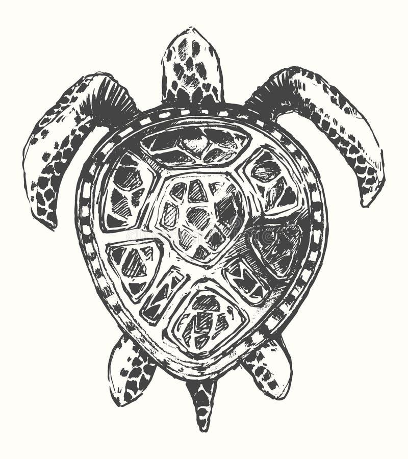 Illustration tirée par la main de tortue, calibre de logo illustration de vecteur