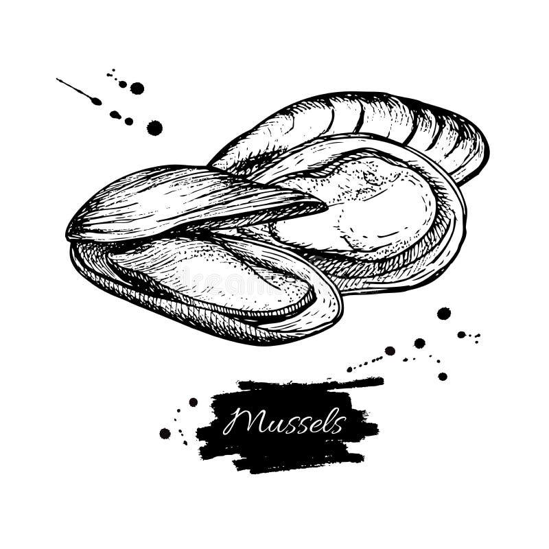Illustration tirée par la main de vecteur de moule Fruits de mer gravés de vintage de style Croquis d'huître illustration de vecteur