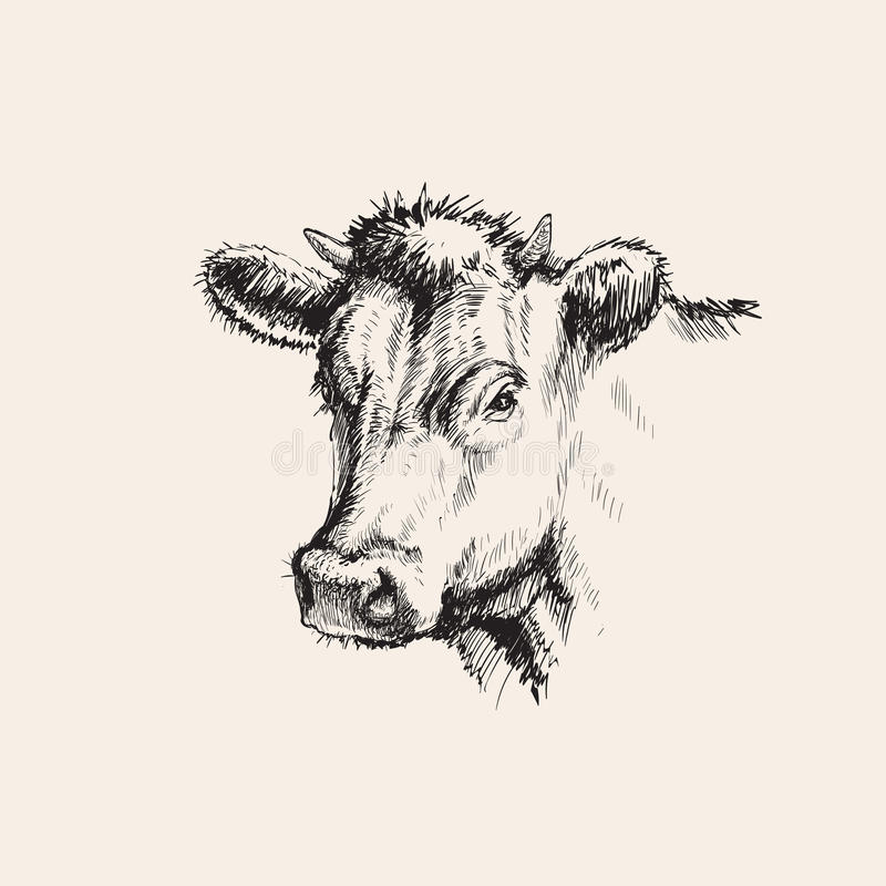 Illustration tirée par la main de vecteur de vache à croquis illustration de vecteur