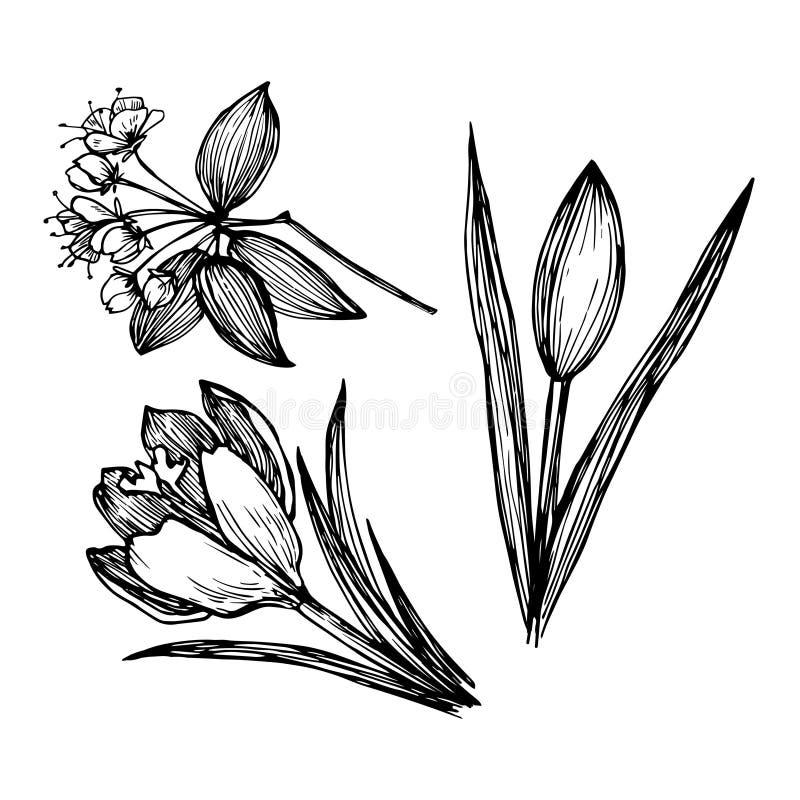 Illustration tirée par la main de vecteur - ensemble de fleurs Encre et plume illustration stock