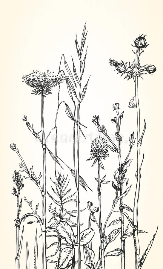 Illustration tirée par la main des herbes et des fleurs sauvages illustration de vecteur