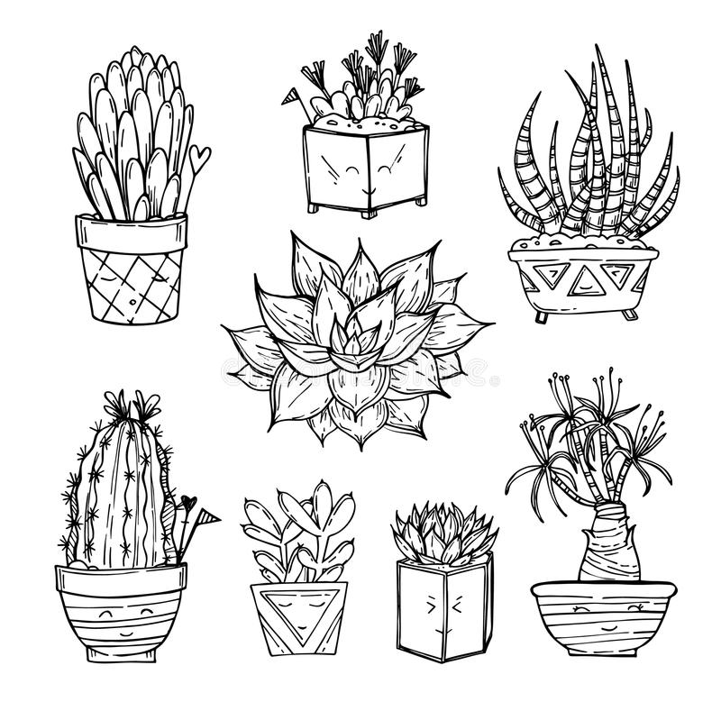 Illustration tirée par la main - ensemble de cactus et de succulents mignons illustration stock