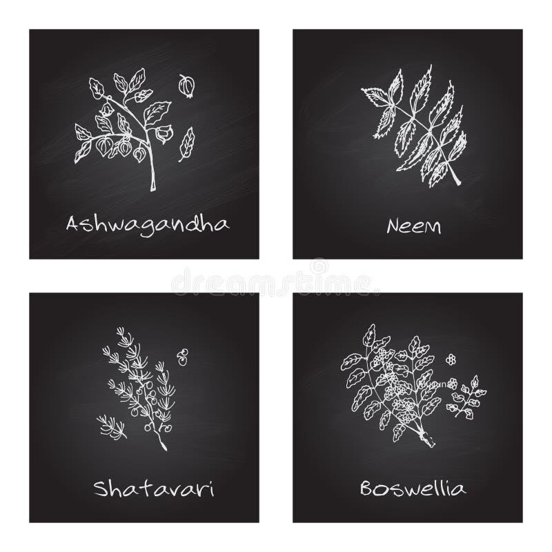 Illustration tirée par la main - ensemble de santé et de nature illustration stock