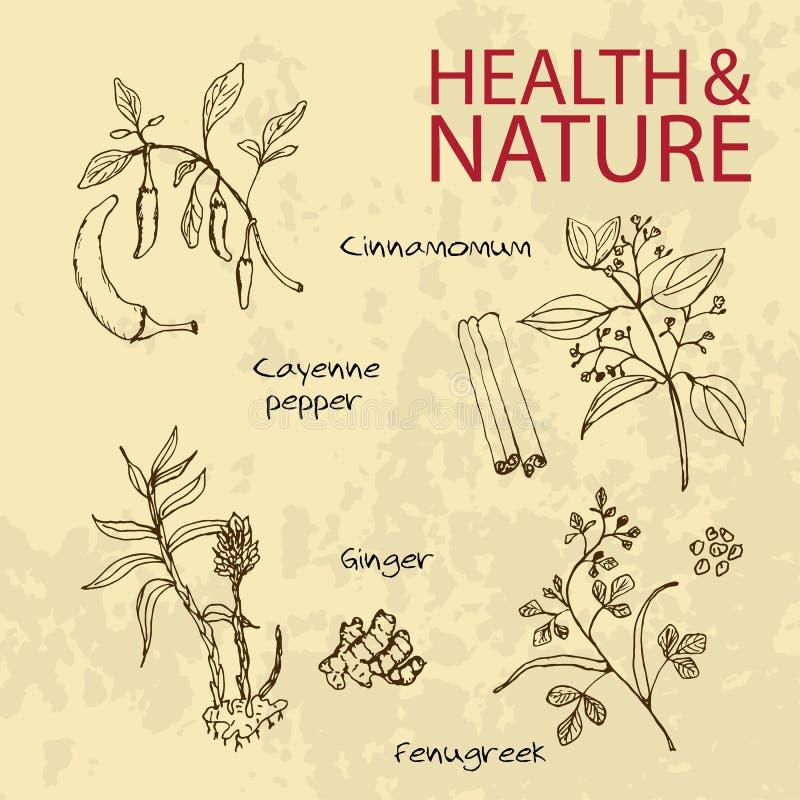 Illustration tirée par la main - ensemble de santé et de nature illustration de vecteur