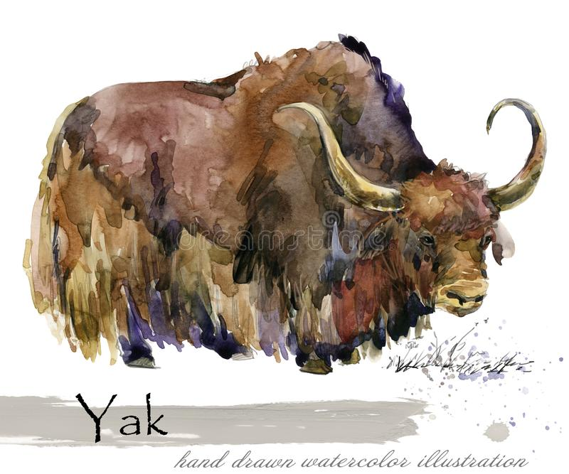 Illustration tirée par la main d'aquarelle de yaks illustration stock