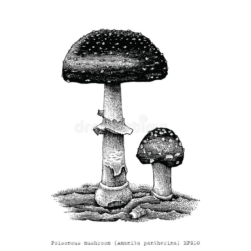 Illustration toxique de gravure de dessin de main de champignon illustration stock