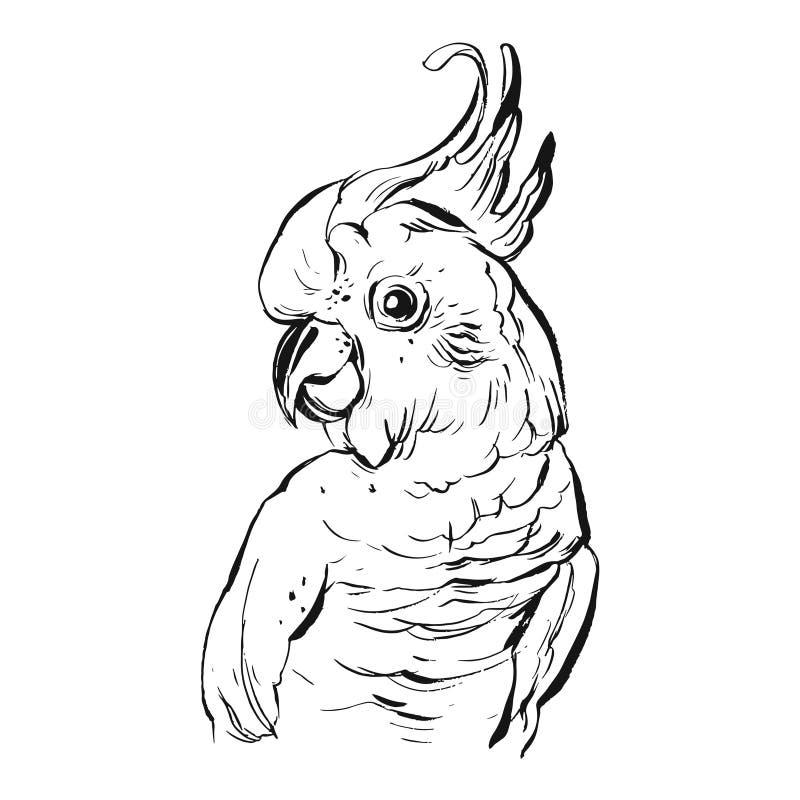 Illustration tropicale réaliste de perroquet de vecteur de brosse d'encre graphique tirée par la main de dessin sur le fond blanc illustration de vecteur